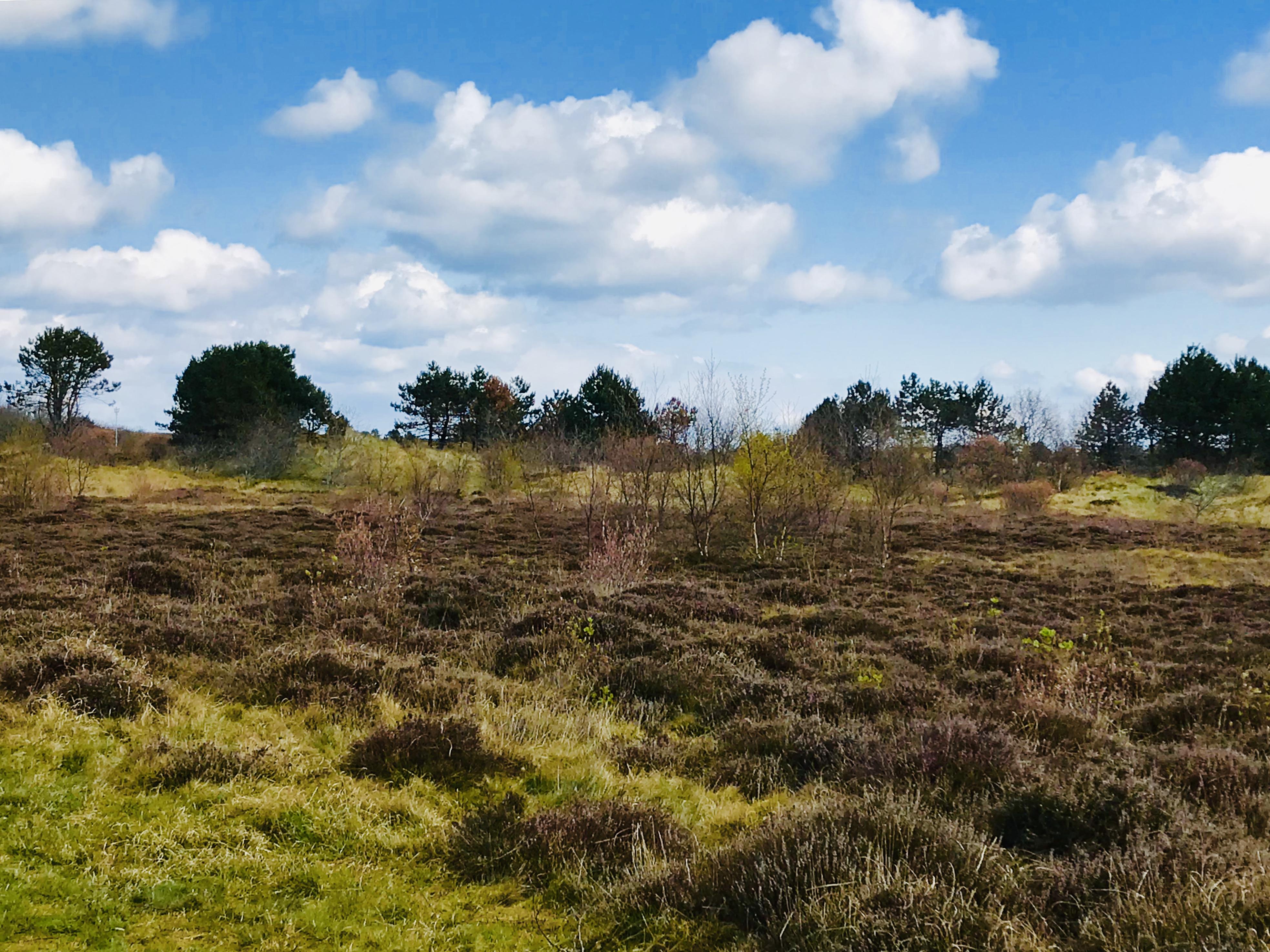 Landschap in Ameland