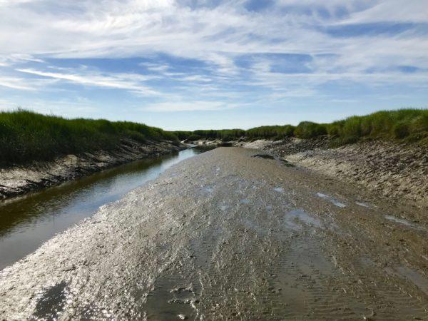 Verdronken Land Van Saeftinghe