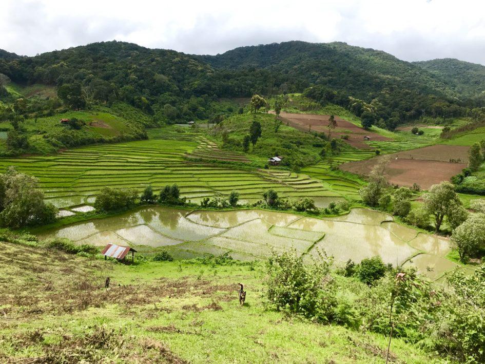 Eco trekking in Thailand. Bergen , jungle, rijstvelden