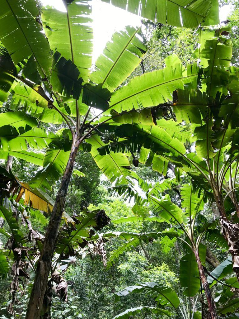 Jungle in Noord-Thailand
