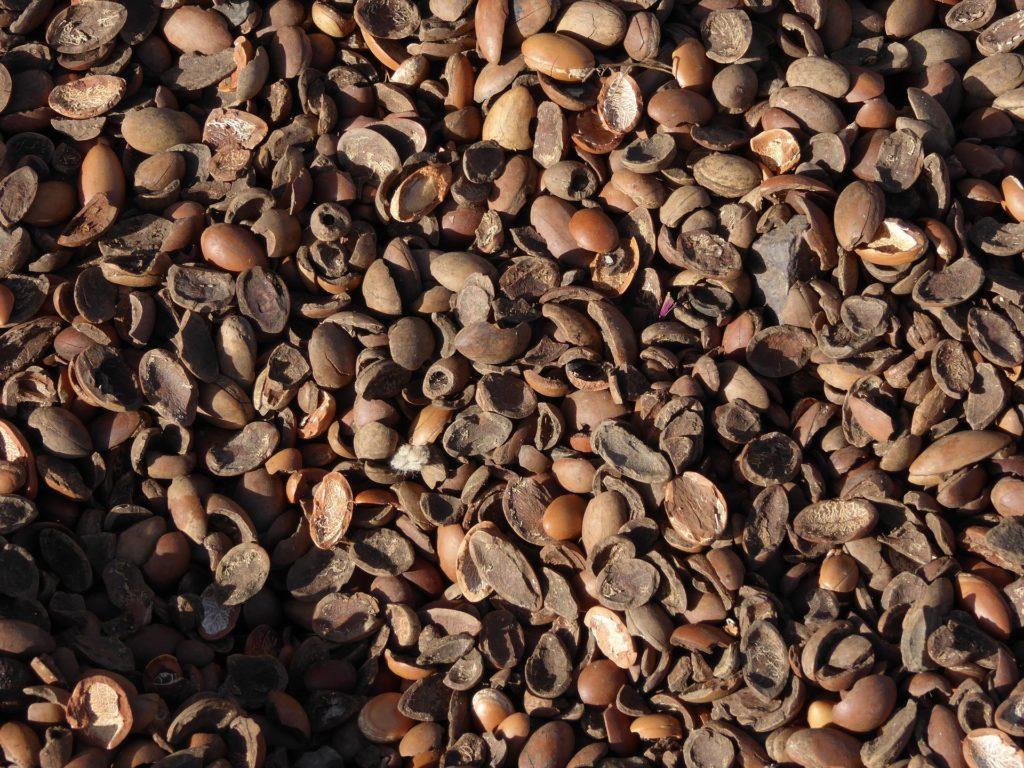 Noten en pitten van de vruchten van de arganboom