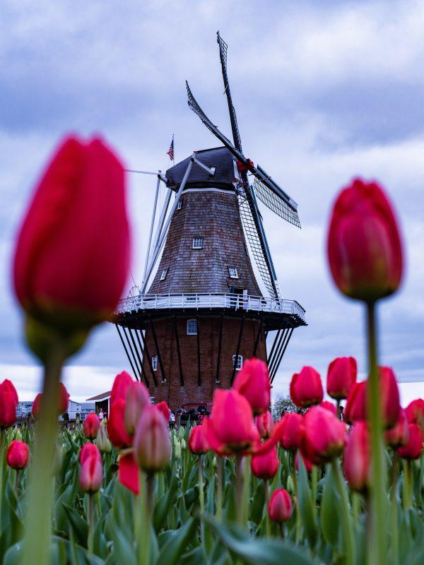 Vakantie in Nederland - tips